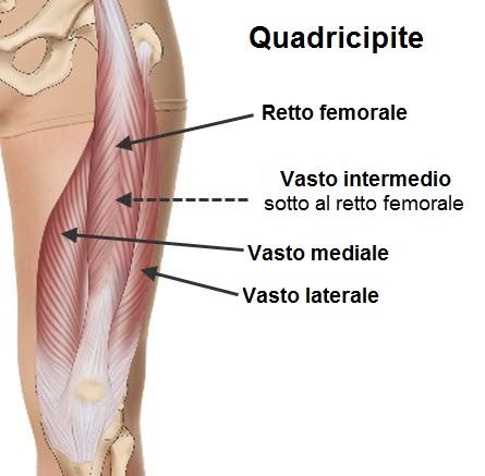 sissy squat - quadricipite