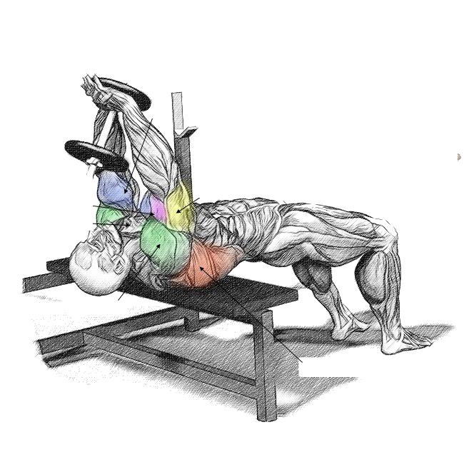pull over muscoli